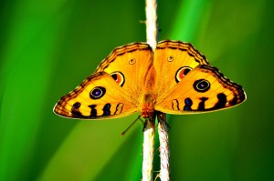construyendo tu propuesta de valor con mariposas